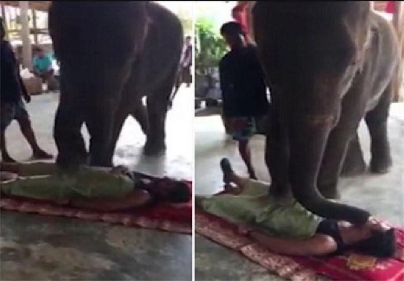 تصاویر جالب از ماساژدرمانی فیل ها در تایلند