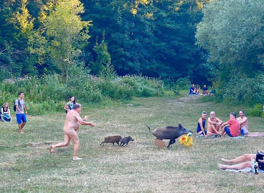شوخی طبیعت با طبیعت گرد آلمانی ، مرد برهنه به دنبال گراز می دود