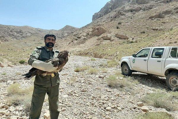 رهاسازی پرندگان در طبیعت بعد از تیمار