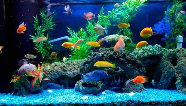 14 ایده جذاب برای تزیین داخل آکواریوم ماهی